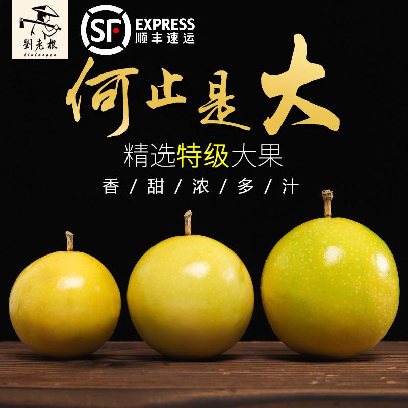 刘老根海南特级大果一级台湾百香果