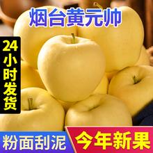 当季新鲜黄元帅苹果黄金帅苹果粉苹果水果黄蕉面黄色苹果水果新鲜