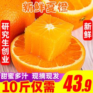 橙子秭归夏橙脐橙10斤装新鲜手剥甜橙中大果冻橙当季现摘水果包邮