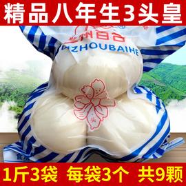 甘肃兰州新鲜百合500克纯农家天然食用生甜百合非特产级百合干图片