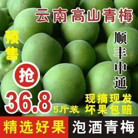 顺丰中通现摘新鲜青梅鲜果梅子水果泡酒散装青梅果酸梅子5斤云南图片
