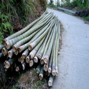 毛竹 楠竹 竹杆 小径竹 绿竹 厘竹 种苗子/装饰建筑工程竹木材料