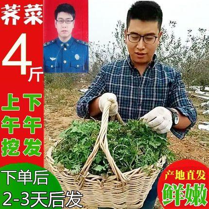 4斤荠菜野菜新鲜包邮 荠荠菜野生现挖现货现发地菜非冷冻荠菜陷干