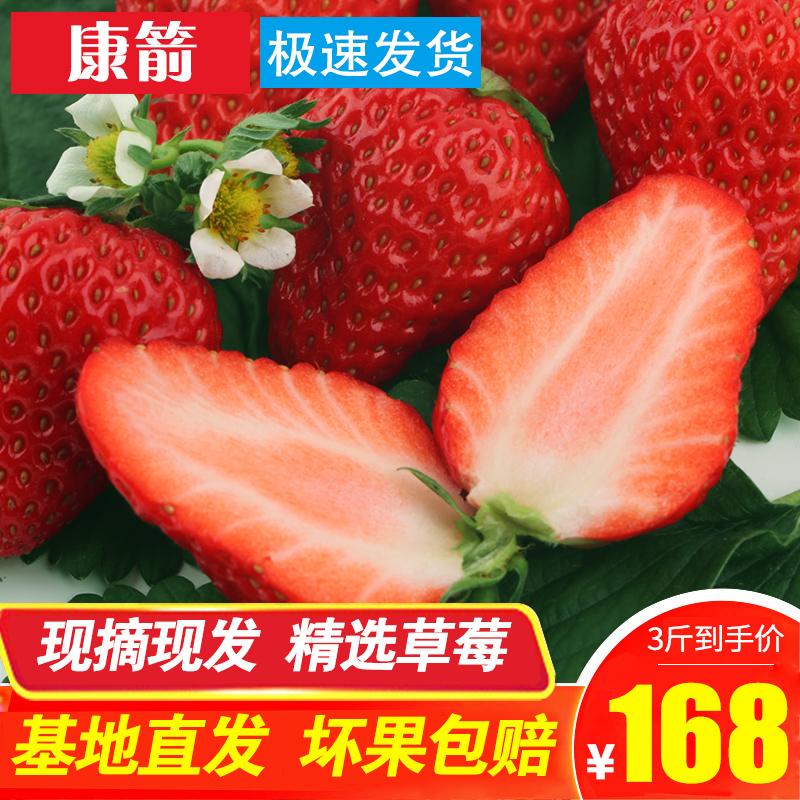 冬季2018安徽长丰草莓均匀奶油红颜草莓新鲜孕妇水果非丹东99大福