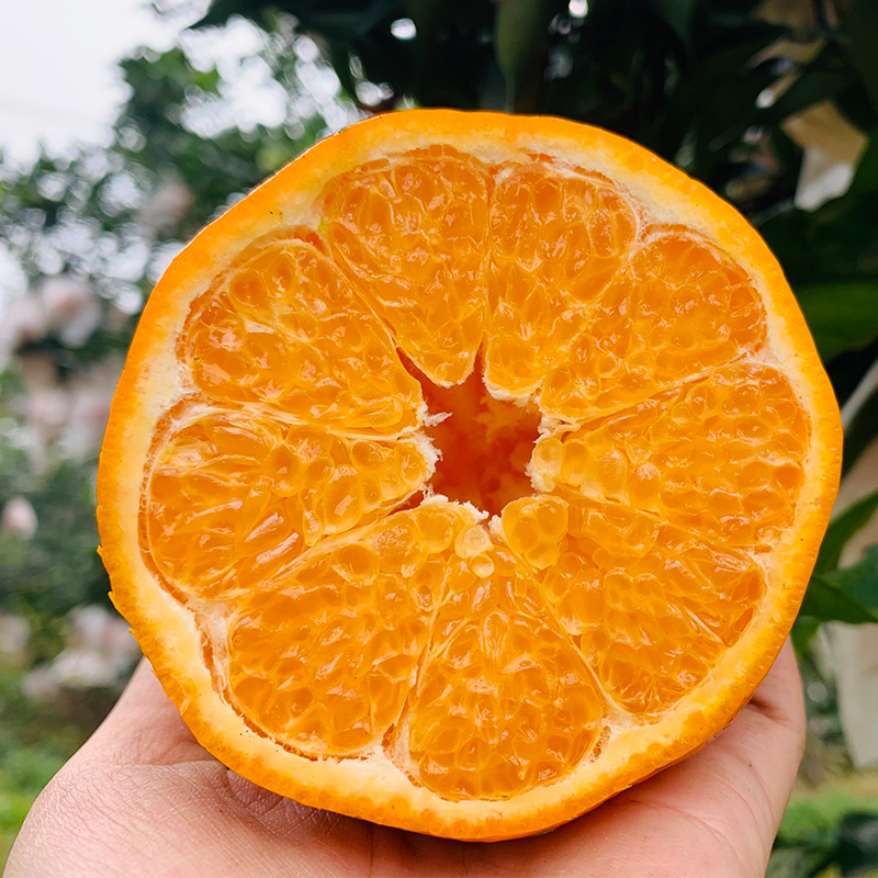 Zoujia Sichuan Danleng chunjianraa Mandarin is fresh, juicy and delicious. Its packed in a gift box