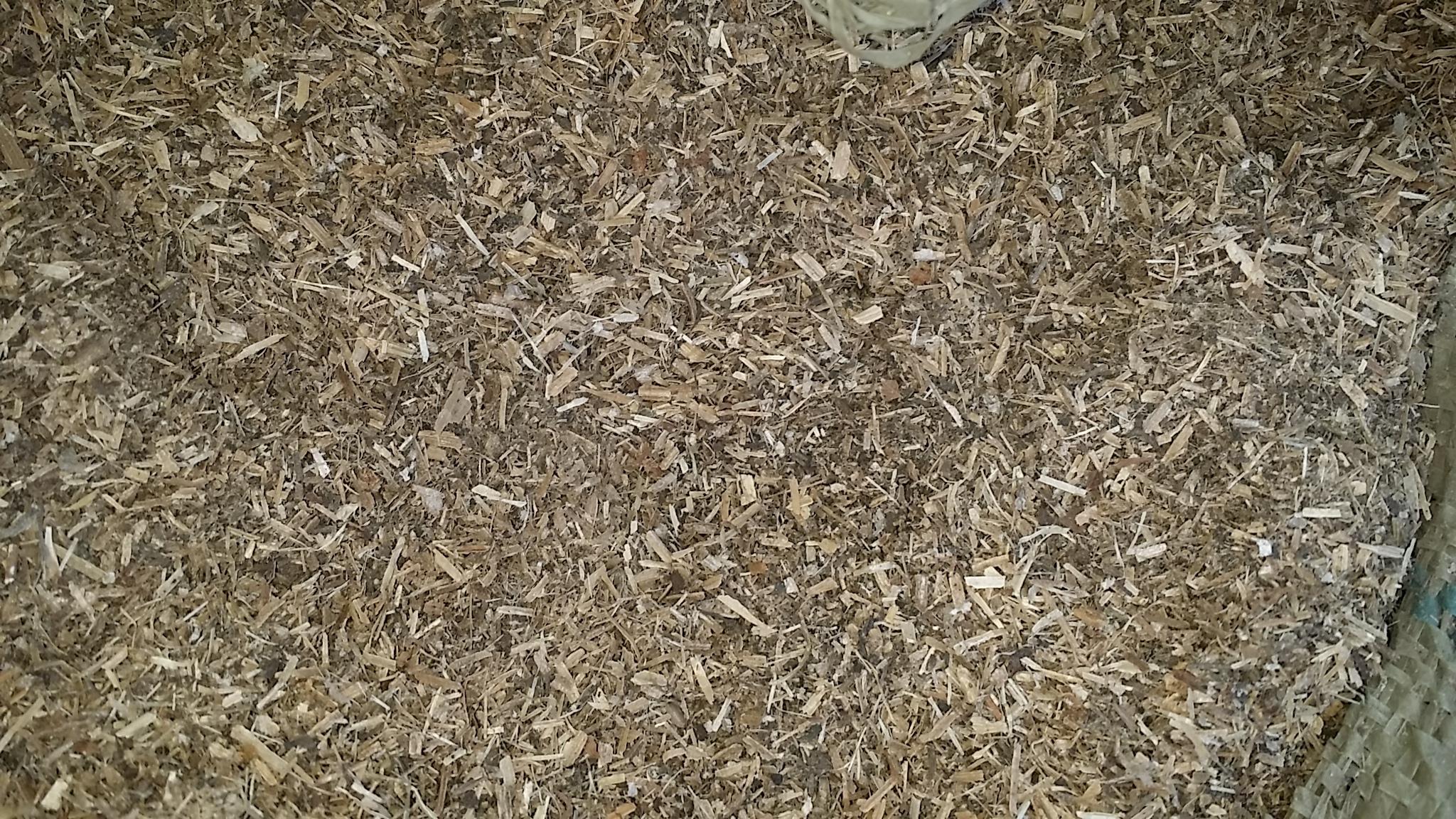 Земля дыня лист отруби земля дыня саженец порошок земля дыня стебель лист отруби красный сладкий картофель соломенный порошок 500 грамм