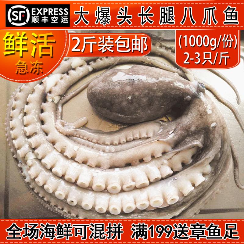 野生长腿八爪鱼鲜活海鲜水产2斤装大爆头长腿大章鱼 新鲜冷冻章鱼