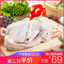 (second half price) duck soil duck 1100g Whole duck farm scattered water duck duck now kill