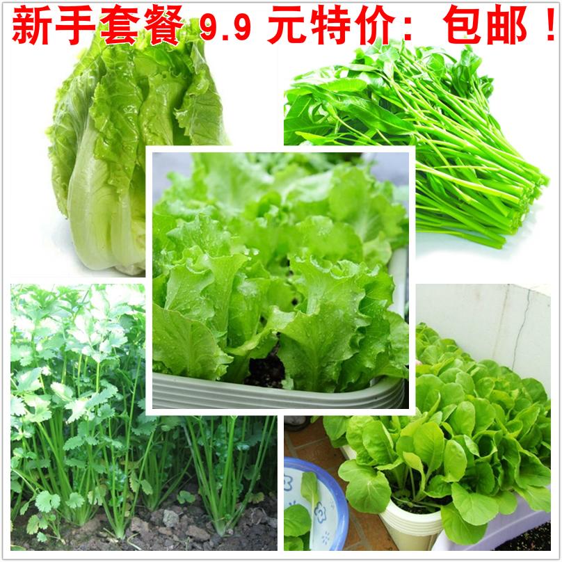 四季蔬菜小白菜香菜空心菜生菜种子阳台花盆菜园盆栽植物套餐包邮