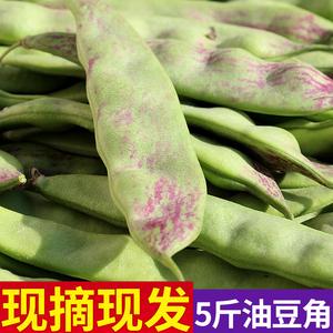 正宗东北油豆角一点红豆角新鲜蔬菜九月青面豆角开锅烂食用农产品