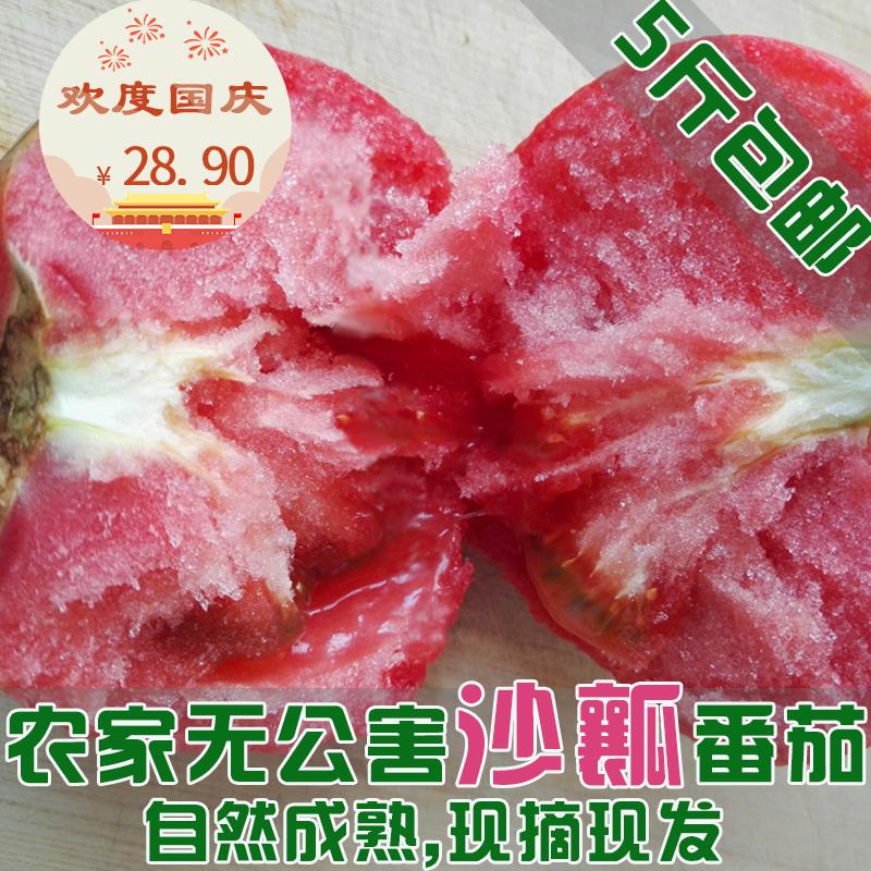 5斤包邮现摘现发沙瓤新鲜西红柿自然熟新鲜番茄孕妇儿童营养水果