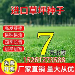 草坪种子护坡草籽绿化狗牙根进口高羊茅黑麦草籽马尼拉四季青庭院