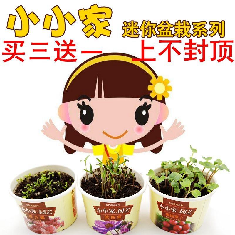 小小家迷你小盆栽宿舍绿植室内薄荷种子盆栽儿童幼儿园小花农植物
