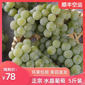 贵州水晶葡萄新鲜水果顺丰包邮5斤装当季现摘孕妇非夏黑巨峰提子