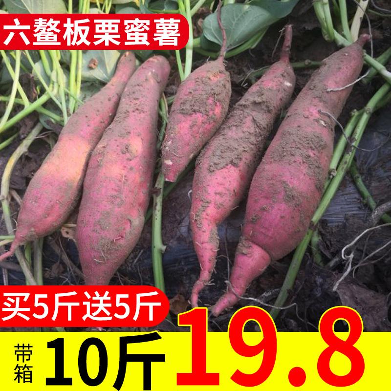 六鳌板栗红薯10斤包邮新鲜农家自种紫小香薯沙地大地瓜六鳌红蜜薯
