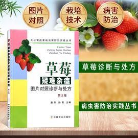 草莓疑难杂症图片对照诊断与处方草莓育苗栽培管理高效种植技术与病虫害防治技术大棚草莓种植技术草莓种植书籍大全草莓栽培技术图片