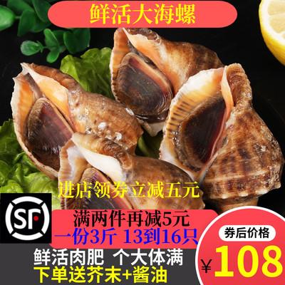 海螺鲜活新鲜海鲜水产特大生鲜贝类顺丰包邮3斤装包活带黄水产