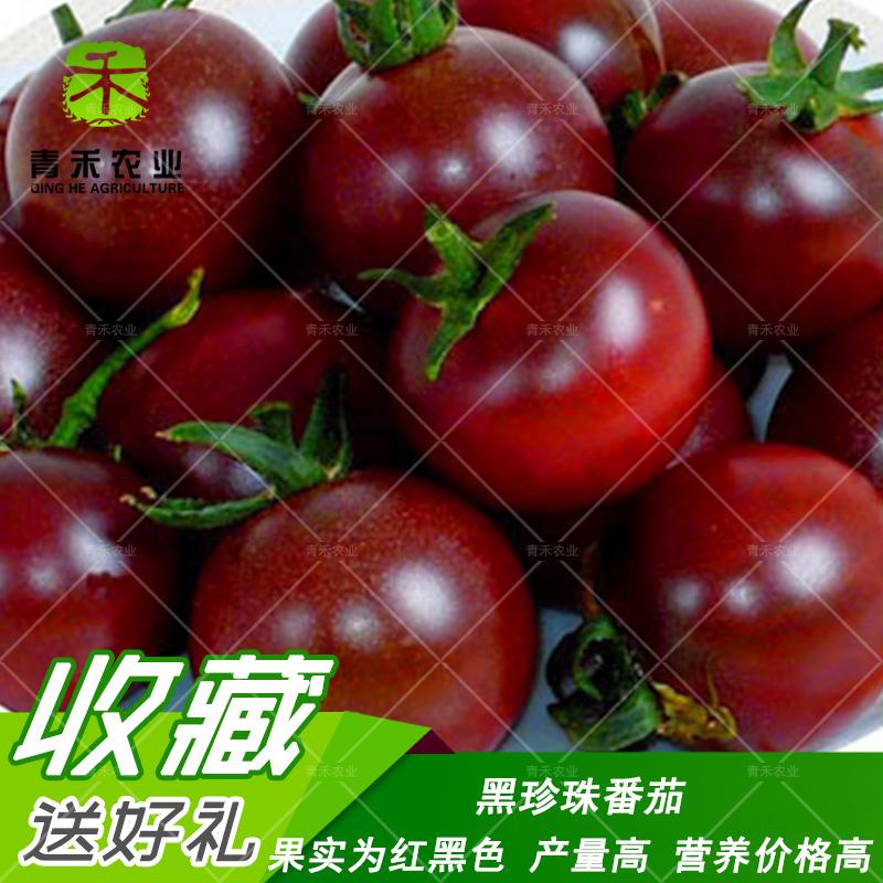 黑珍珠番茄种子 迷你小西红柿高产农家菜园阳台大棚种植水果 包邮