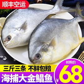 野生深海生鲜金鲳鱼新鲜特大海鱼鲜活冷冻鱼类海鲜海捕银鲳鱼平鱼图片