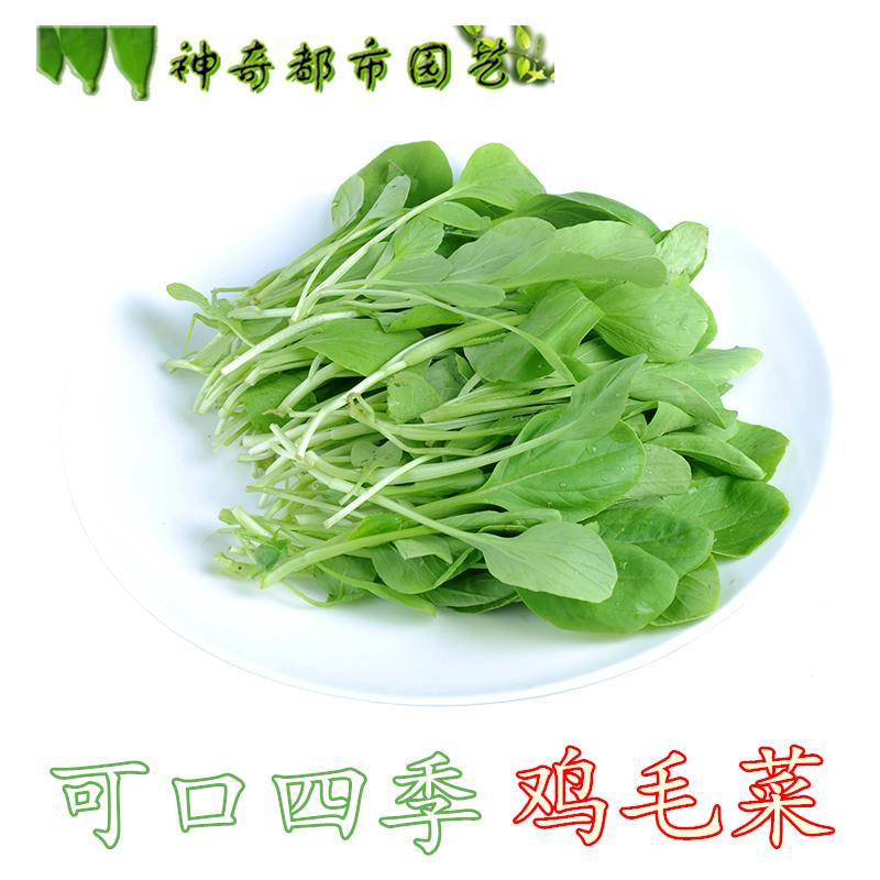 上海青鸡毛菜种子20天盆栽阳台籽种青菜小白菜蔬菜种孑种籽四季播热销106件需要用券