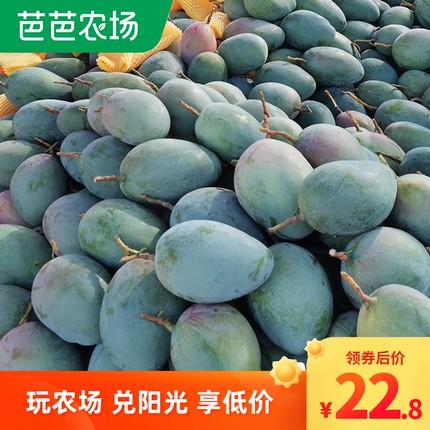 四川攀枝花凯特芒果当季新鲜水果现摘现发大青皮芒特大整箱9斤