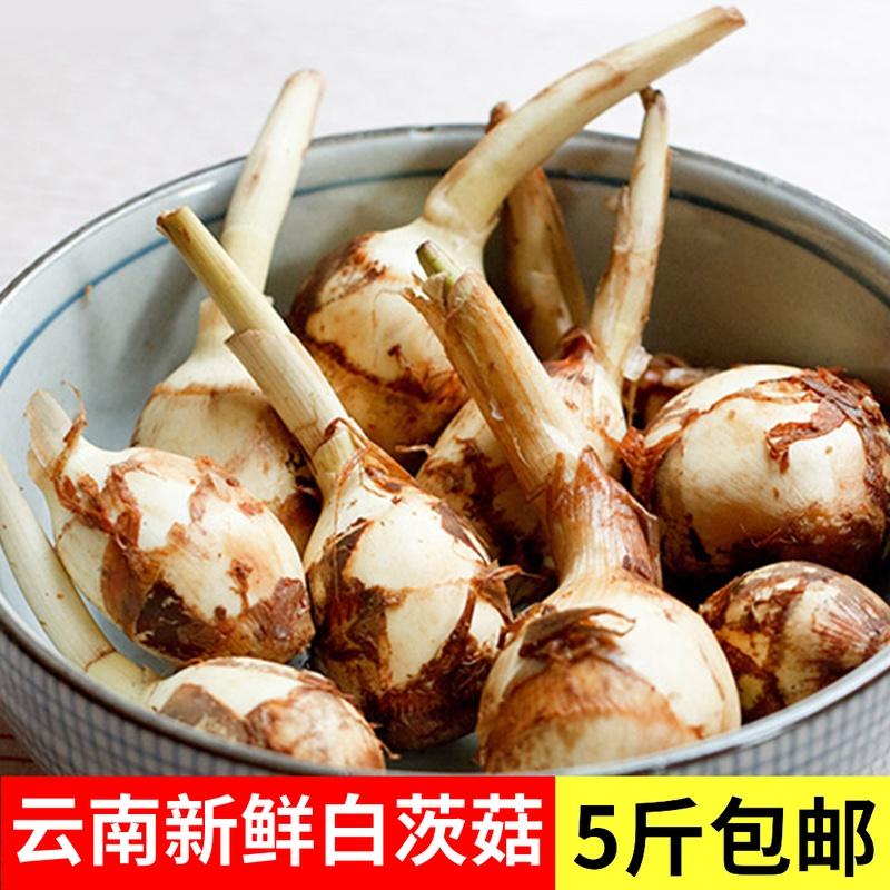 云南新鲜白慈姑茨菰茨菇白马蹄鲜特产5斤粉糯荸荠新鲜蔬菜包邮