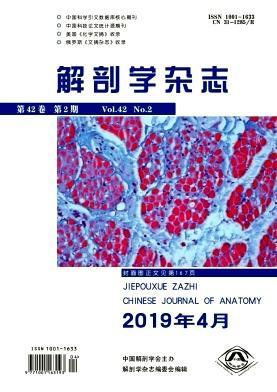 正版解剖学(2019年-第2期)书店杂志