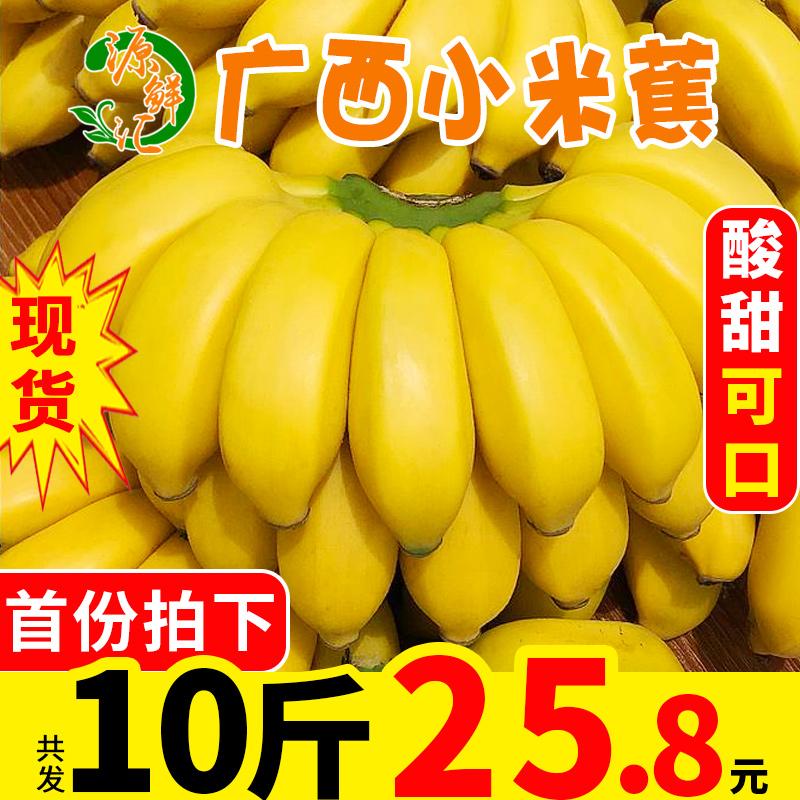 源鲜汇 广西小米蕉新鲜banana酸甜水果当季10斤香蕉批发芭蕉包邮