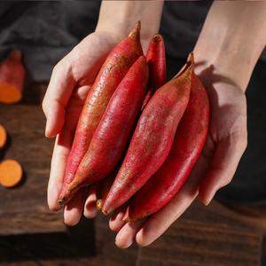领【5元券】购买六鳌蜜薯5斤沙地小农家自种紫薯