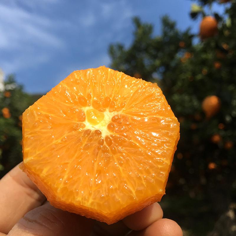 蜜莱脐橙伦晚秭归夏橙香甜无渣薄皮自然成熟鲜橙大果10斤现摘橙子