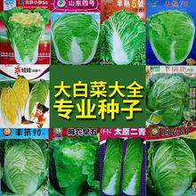 大白菜大全种子孑籽四季结球包心高杆青梗白梗白菜黄芽菜泡酸菜