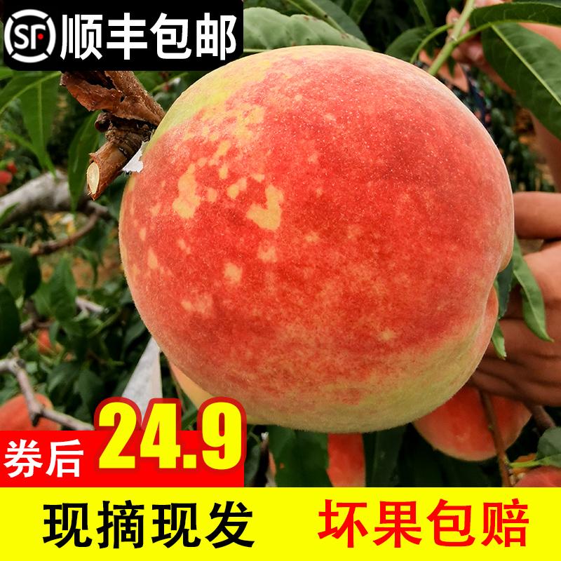 现季山东秋桃寒露蜜5斤金秋红蜜桃子脆甜当季新鲜水果映霜红冬桃