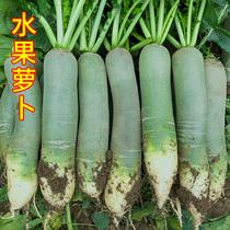 萝卜新鲜甜脆水果型非沙窝胡罗卜 潍县青水萝卜蔬菜 生吃10斤包邮