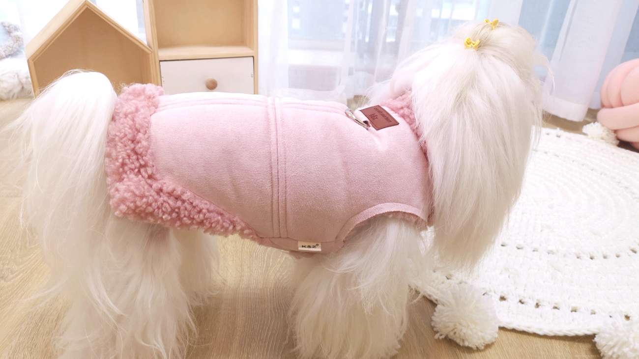 KZ suede all in one coat pet autumn and winter cat clothes British kitten hairless Garfield Teddy
