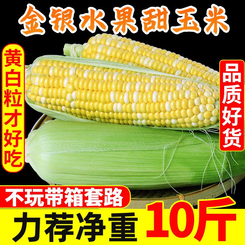 云南金银水果玉米10斤新鲜现摘蔬菜