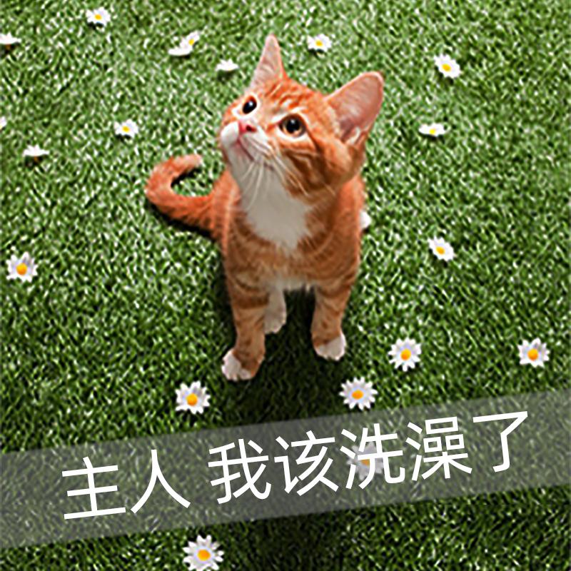 好贝尼猫咪狗狗专用宠物沐浴露香波幼猫留香除臭螨猫咪洗澡液用品