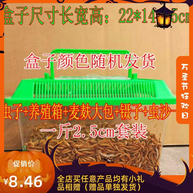 新鲜面包虫麸皮虫活虫鱼羊小麦皮麦麸饲料饵料活体鸡鸭-羊饲料(蓝朋友旗舰店仅售8.46元)