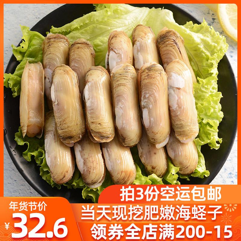 青岛本地鲜活大蛏子新鲜竹蛏子鲜活现捕无沙海鲜水产个大肉肥500g