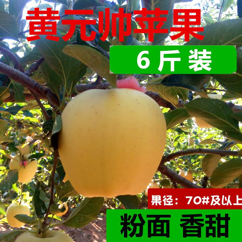 黄元帅黄金帅粉苹果面苹果新鲜水果婴儿辅食可刮泥当季应季沙苹果