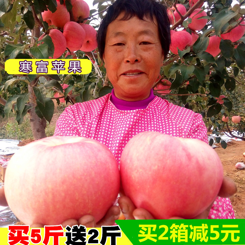 新鲜寒富苹果辽宁 东北寒富苹果生鲜当季 水果酸甜非红富士 apple