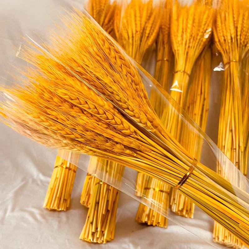 金色麦穗干花天然小麦客厅田园装饰展会摆件演出道具开业大麦花束