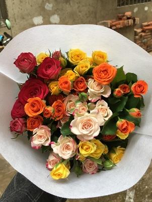 玫瑰各色拼色小玫瑰新鲜鲜花多头混色玫瑰彩玫瑰云南昆明基地空运