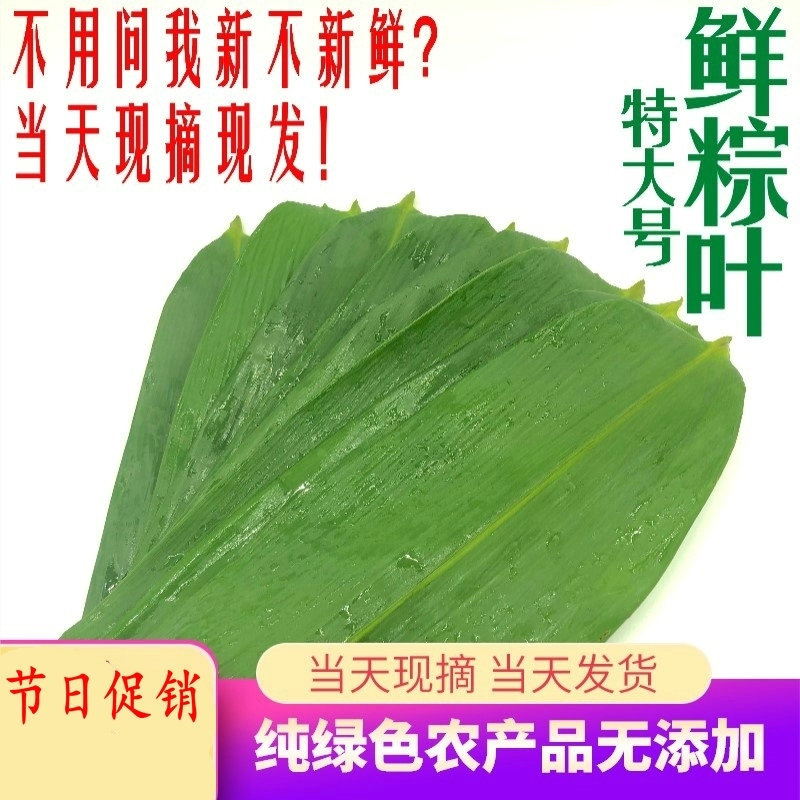 Fresh rice dumpling leaves pick free mail wide wild dry leaves natural wrapped rice dumpling leaves large size Dendrocalamus latiflorus leaves 100 pieces
