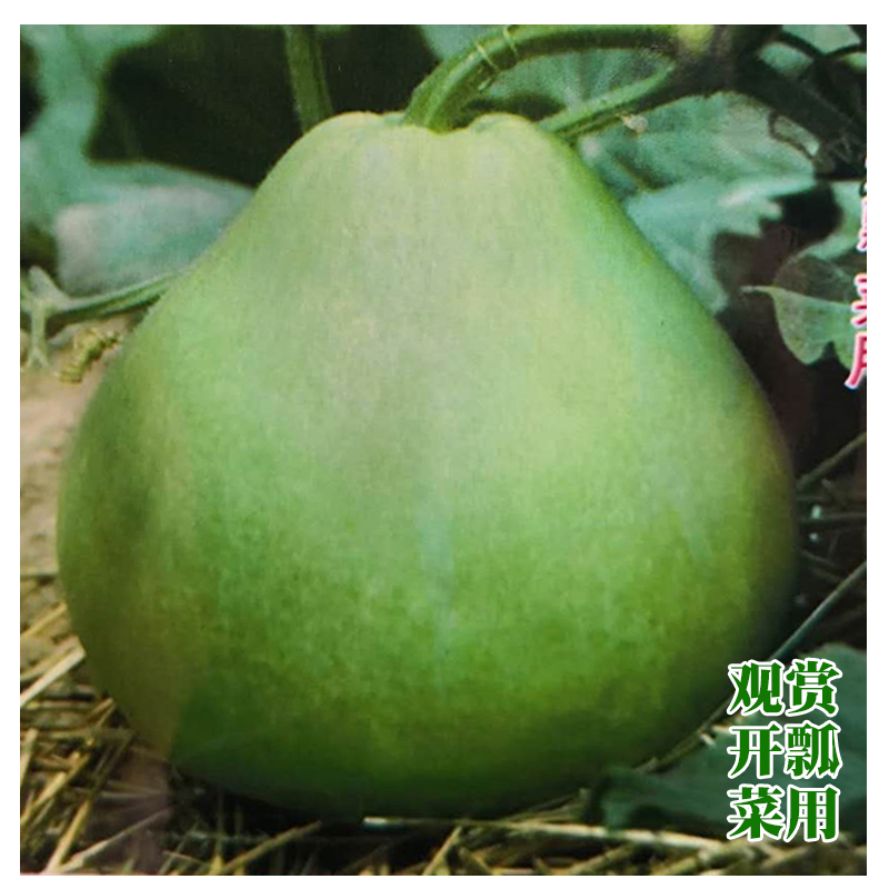 农家菜葫芦种子 瓢葫芦种子 可以做瓢 观赏蔬果种子观赏 开瓢菜用