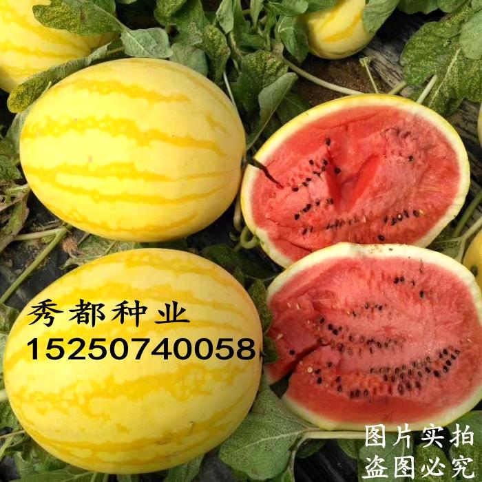 Yellow skin red flesh sweet King watermelon seeds seedless little Kirin 8424 seeds four seasons high yield giant slob