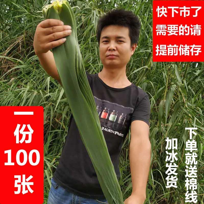 野生旱苇叶新鲜粽叶 包粽子 旱地 芦苇叶 非竹叶非烘干粽叶大粽叶