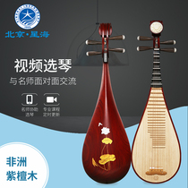Xinghai pipa African Rosewood Wood Antique sumu axis log colored flowers open Rich headwear pipa musical instruments