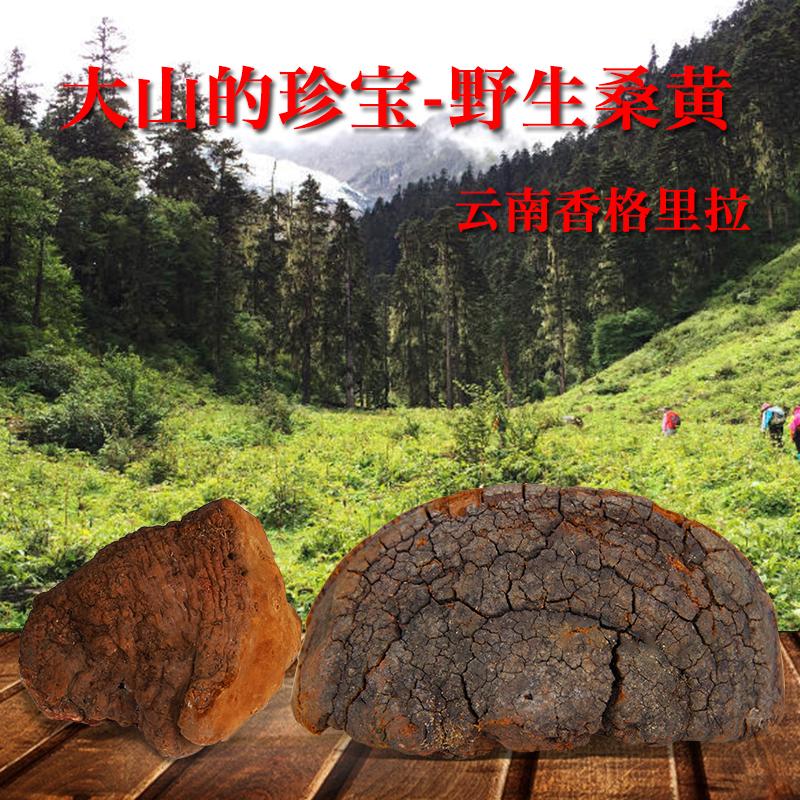 Специальная чистая натуральная дикая шелковица Sanghuang 250г оригинал Лоскутная классическая обрезка ganoderma lucidum