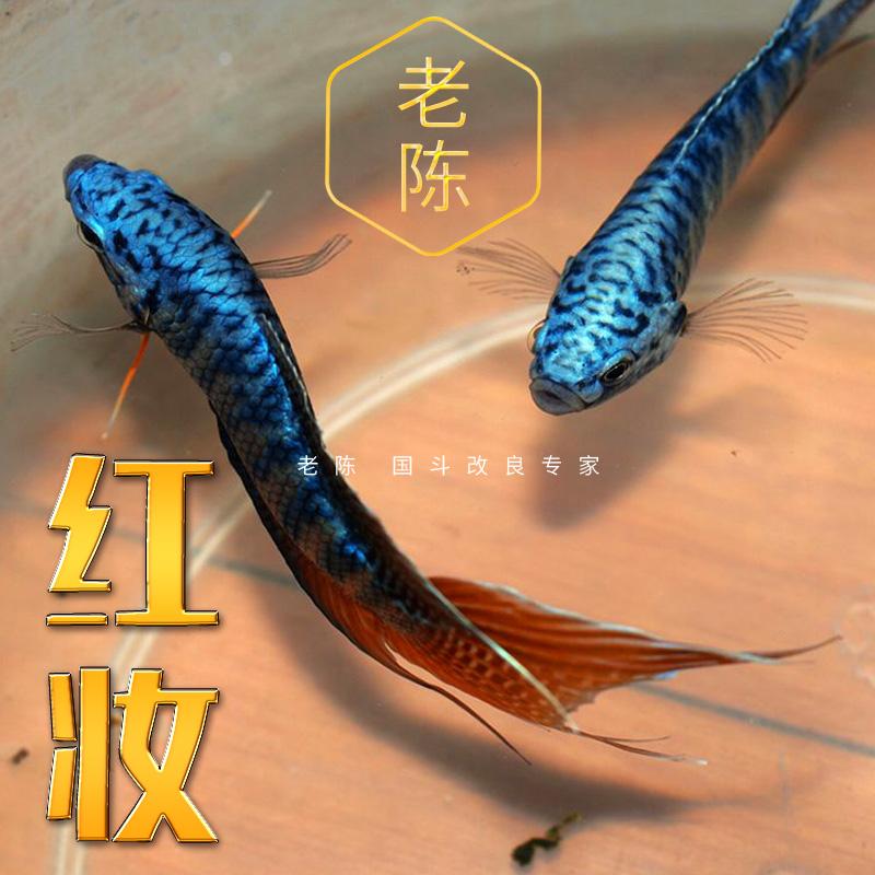 Рыбы Артикул 597480353621