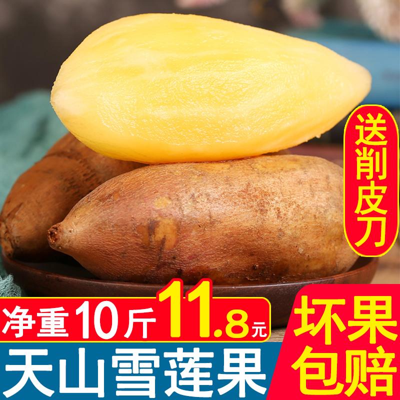 【送削皮刀】云南天山雪莲果红泥沙黄心新鲜水果当季包邮净重10斤
